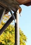 Gerüst.25.09.2011_3